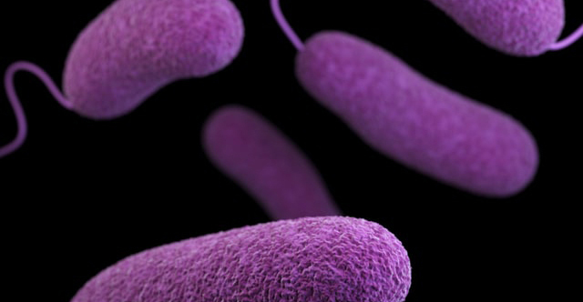 THE MICROBIOME AND RISK OF DIABETES